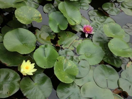 本照寺の池