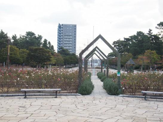 浜寺公園_噴水前のバラ