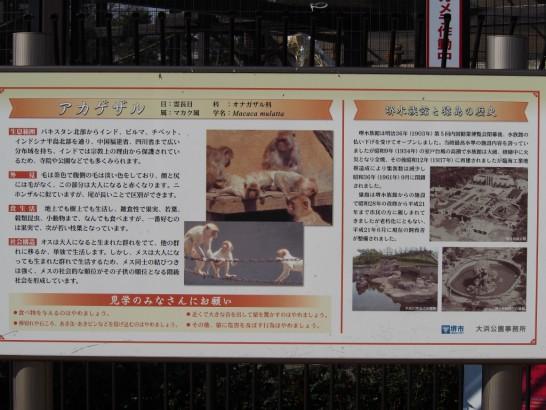 大浜公園の猿看板