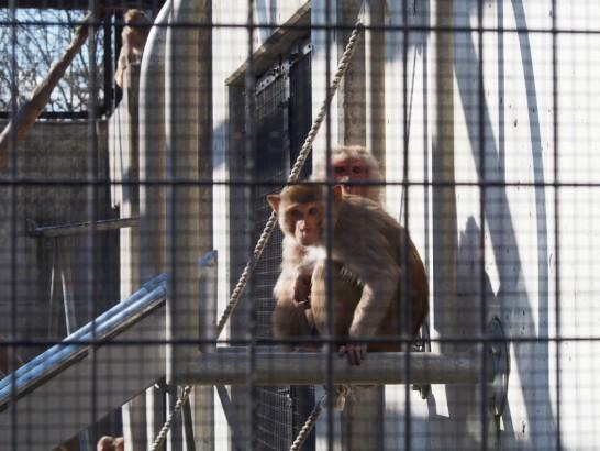 大浜公園こっちを見る猿