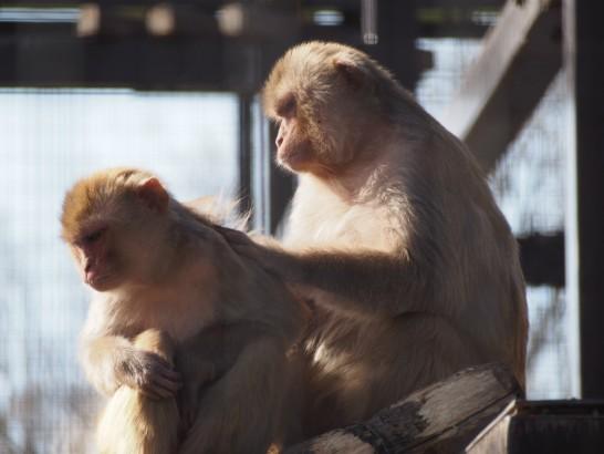 大浜公園毛づくろいする猿