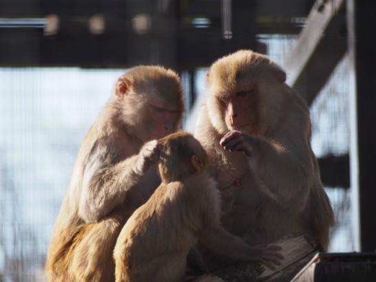 大浜公園の親子猿(予想)