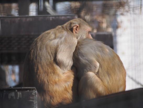 大浜公園の寄り添う猿