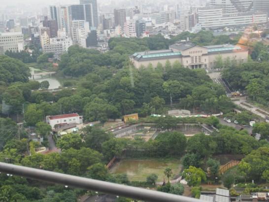 通天閣から見た天王寺動物園