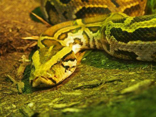 天王寺動物園のヘビ