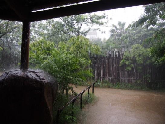 大雨の天王寺動物園