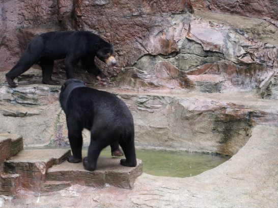 天王寺動物園の熊