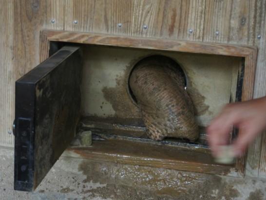 天王寺動物園の象の鼻
