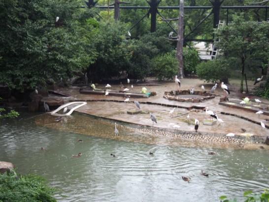 天王寺動物園の鳥の楽園2
