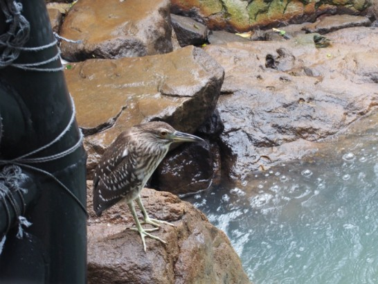 天王寺動物園の鳥の楽園