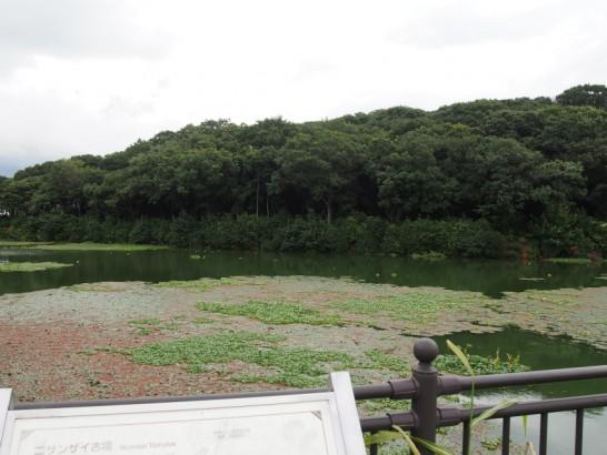 ニサンザイ古墳の濠3